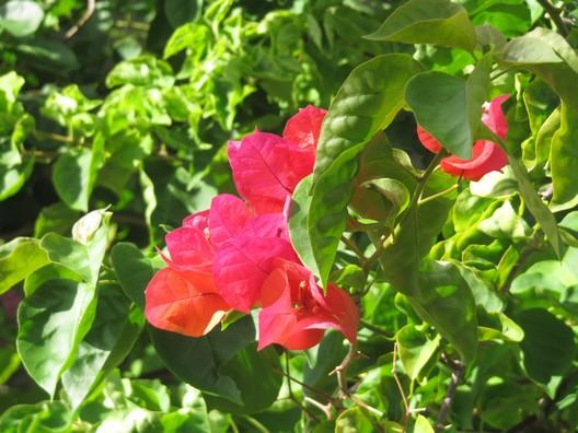A Flor Ita IMG_4079