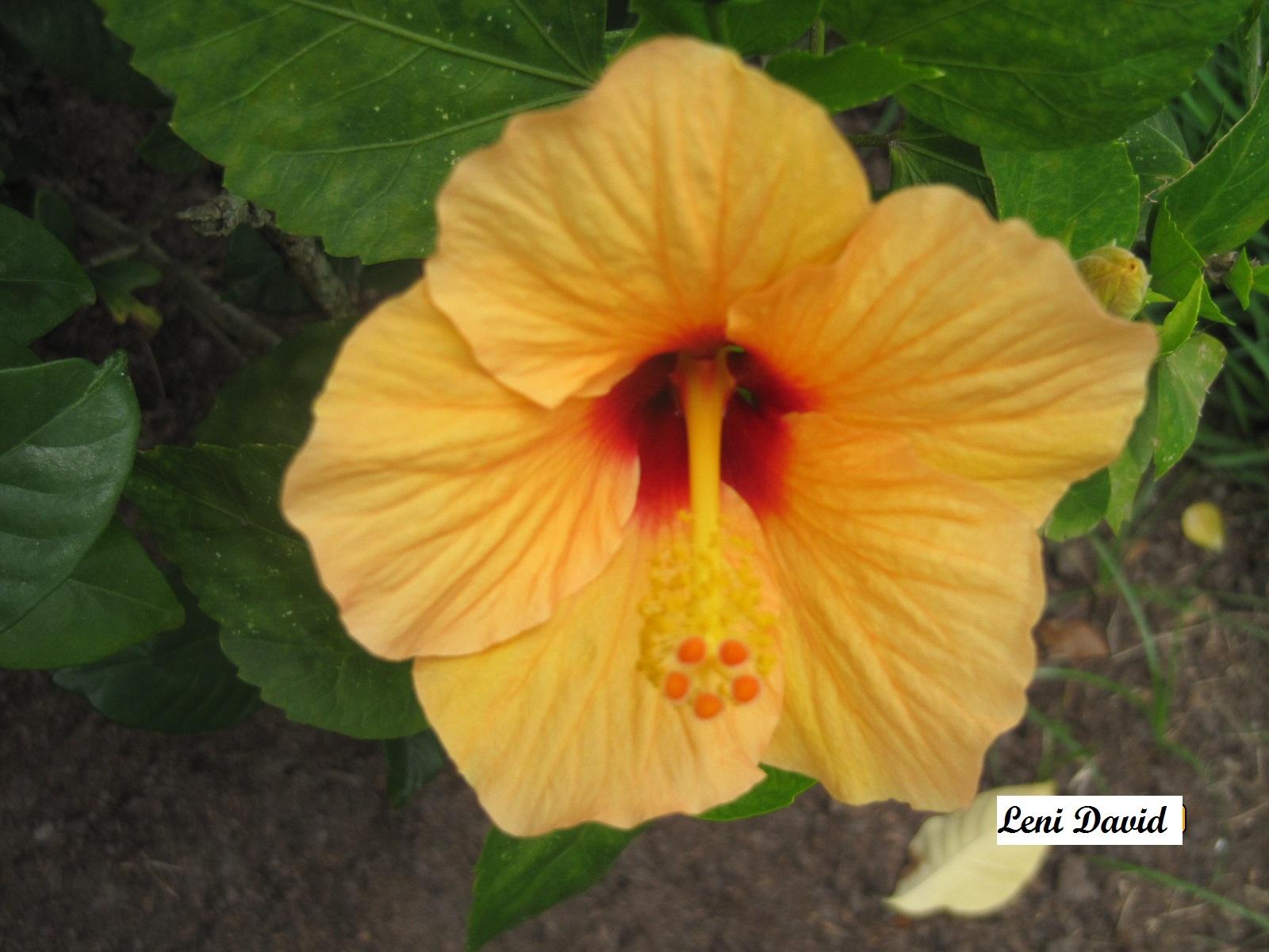 Flor_amarela